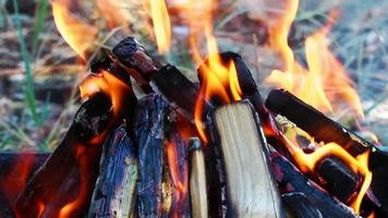 legno che brucia insieme