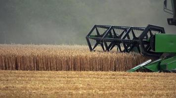 récolte agricole dans le champ de blé video