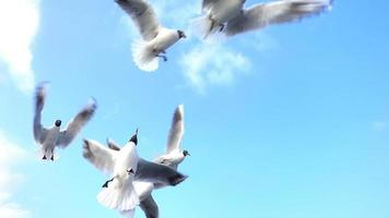 gaivotas voando e comendo no céu