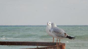 duas gaivotas em uma construção enferrujada
