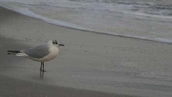A seagull standing close to the ocean