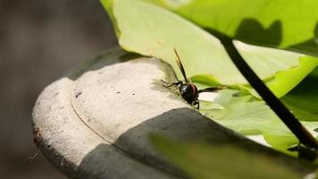 duas vespas bebendo água video