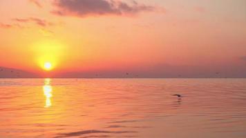 pássaros voam sobre um pôr do sol amarelo
