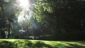 Slider Shot In A Sunny Park