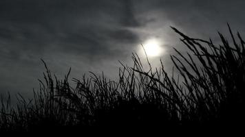 Dark Spooky Grass Silhouette And Mysterious Sky