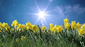 flores de primavera y cielo soleado