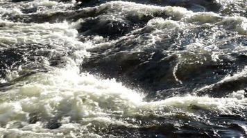 fondo de río salvaje video