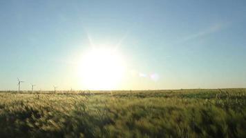 campo de trigo bajo el sol video