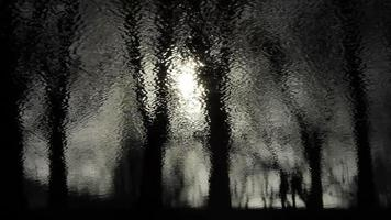 Dark Lake Mirroring Trees And People