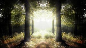 portail magique dans la forêt fantastique