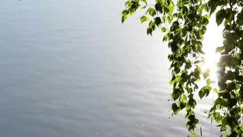 hojas de abedul y superficie del agua
