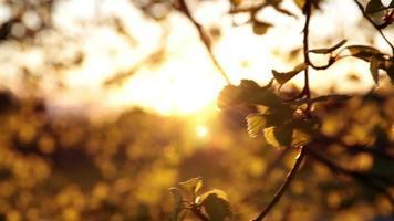 folhas de árvore e vento