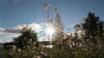gros plan de fleurs d'été