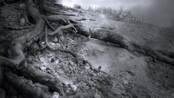 areia e raízes