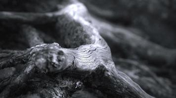Tree Roots Close up with Lightnings