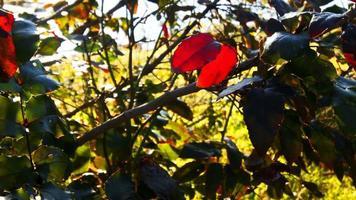 hojas de otoño y luz del sol