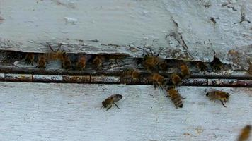Insect Animal Bees in Beehive