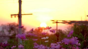 die Sonne am Himmel hinter den Blumen