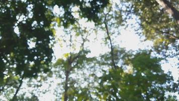 fundo desfocado das copas das árvores em uma floresta