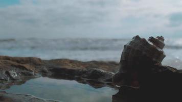 una concha en una piedra junto al mar