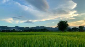 vista del campo verde con hermosas montañas video