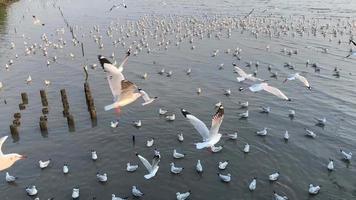 Bandada de gaviotas volando libremente sobre el agua