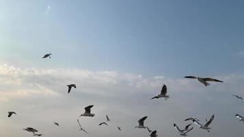 bandos de gaivotas voam no céu video