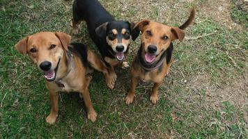 Three Happy Mixed Breed Dogs Looking Up at Camera