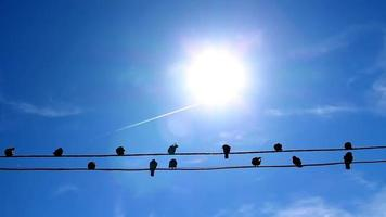 pájaros silueta de pie sobre cables eléctricos video