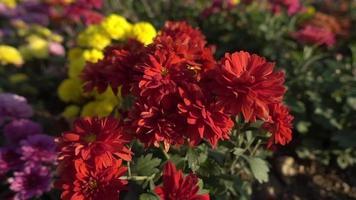 Vista cercana del invernadero de flores