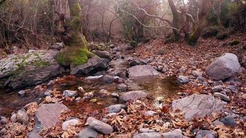 arroyo de la cascada y hojas de otoño en la naturaleza salvaje