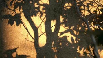 árvores balançando sombra na parede de cimento ao pôr do sol