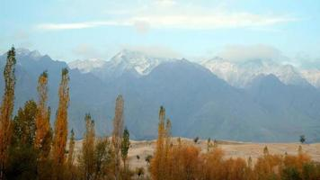 Trees swaying in autumn against desert and snow capped mountains
