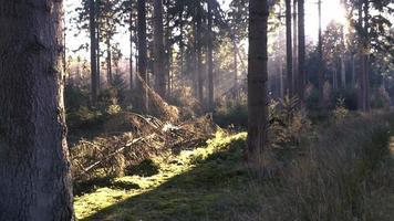 o sol atinge o solo da floresta expondo uma árvore caída