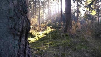 una toma panorámica siguiendo el árbol hacia arriba video