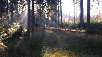 The sun shines through the forest mysteriously