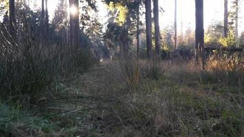 um tiro rasteiro pela grama em uma floresta video