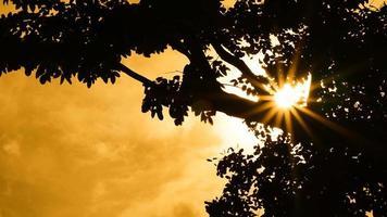silhueta de uma árvore no pôr do sol laranja