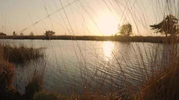 passando pela grama para ver o pôr do sol no rio