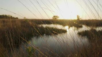 hierba moviéndose en el viento por una pequeña brisa durante la puesta de sol