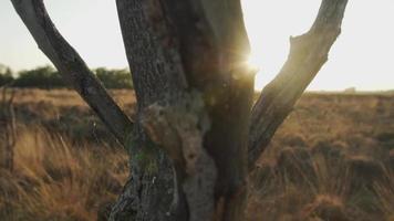 pôr do sol vindo de trás de uma árvore morta