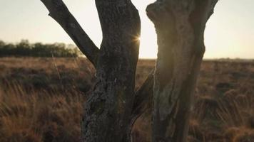 Sol deslumbrante entre los troncos de los árboles durante la puesta de sol video