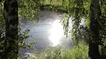 árboles y reflejos de la luz del sol en un río