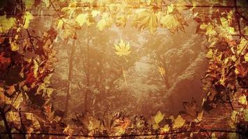 loop de fundo do quadro de outono