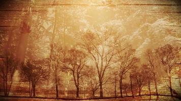 fantasia fundo da temporada de outono