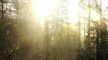 sprites en el bosque de cuento de hadas