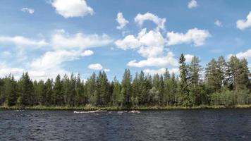 río y bosque durante el verano.