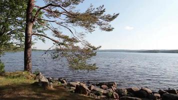 árbol en un lago