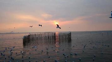 puesta de sol y gaviotas migratorias