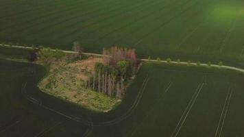 drone orbitando una arboleda en un campo verde en 4k video